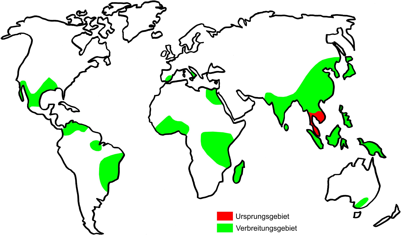 Kare kare origin