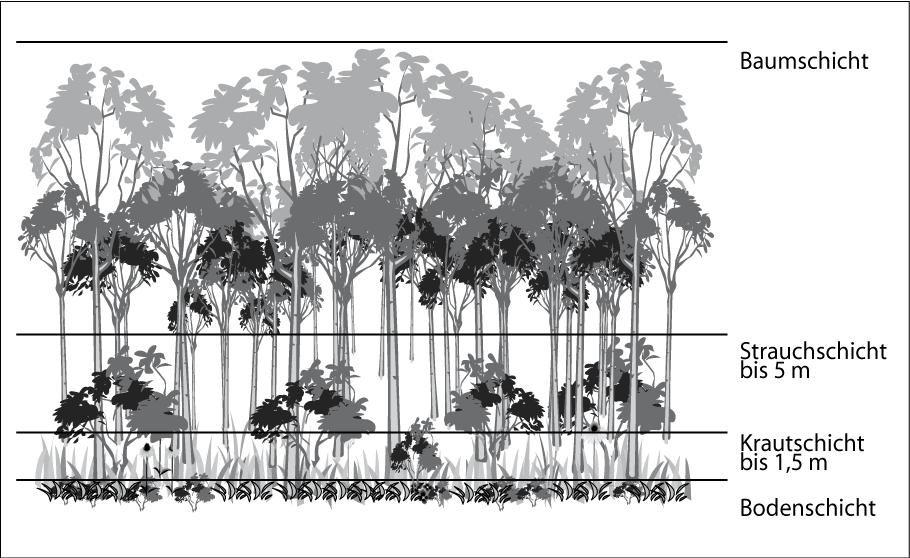 Stockwerke des Waldes  Naturdetektive für Kinder  www