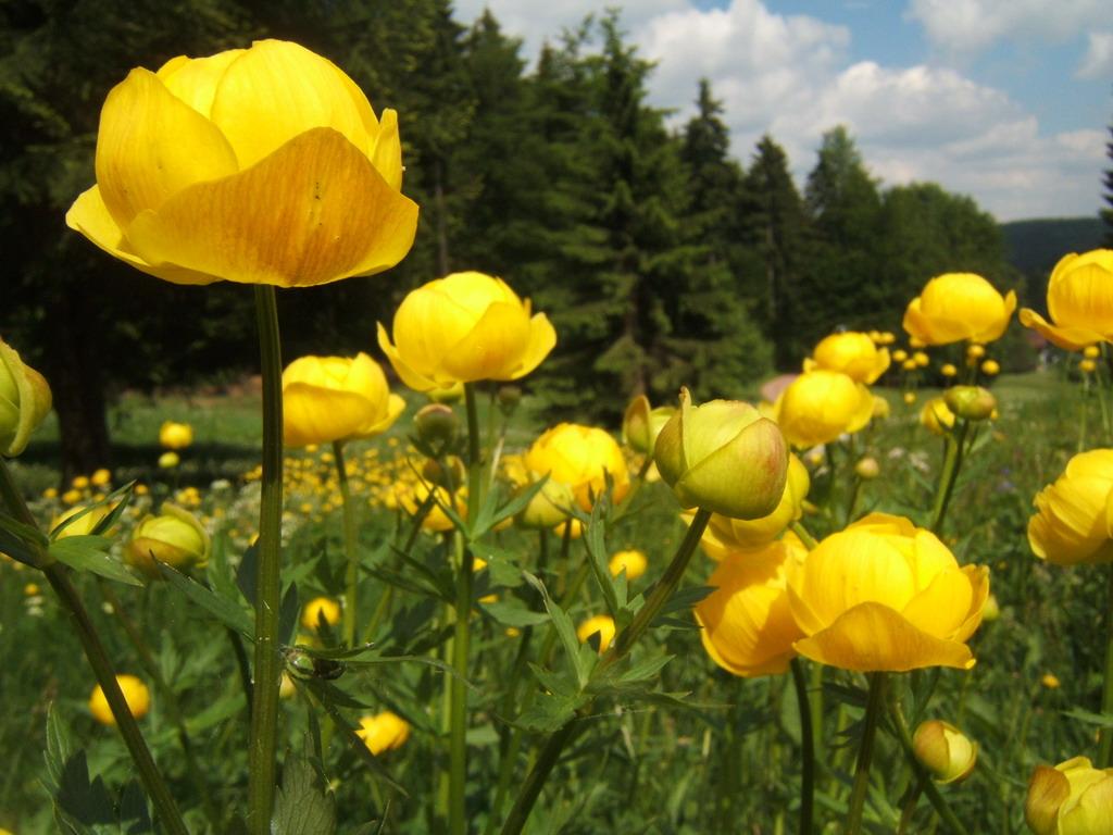 Картинки цветка италмас 6