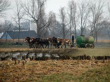 Amish - Here we go a-manuring by Gadjoboy.jpg