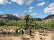 Bear Canyon Trail at Sabino Canyon.jpg