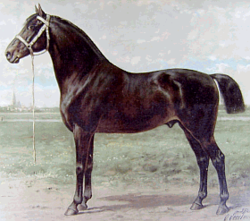 Oost-Fries Paard Lithografie 1898.png
