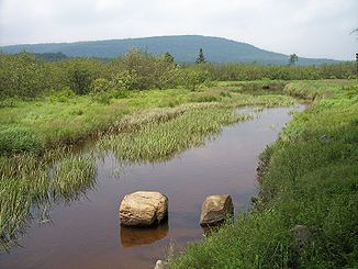 Der Blackwater River am Oberlauf im Canaan Valley Resort State Park
