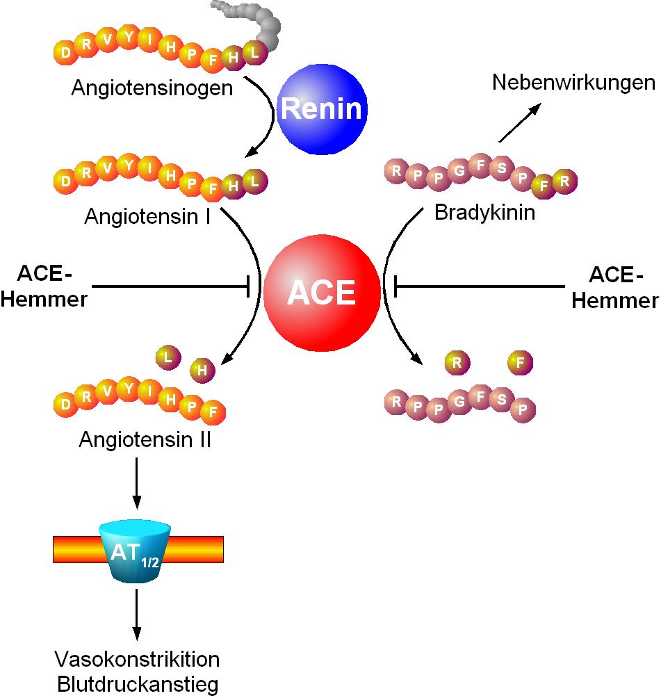 metformin usages