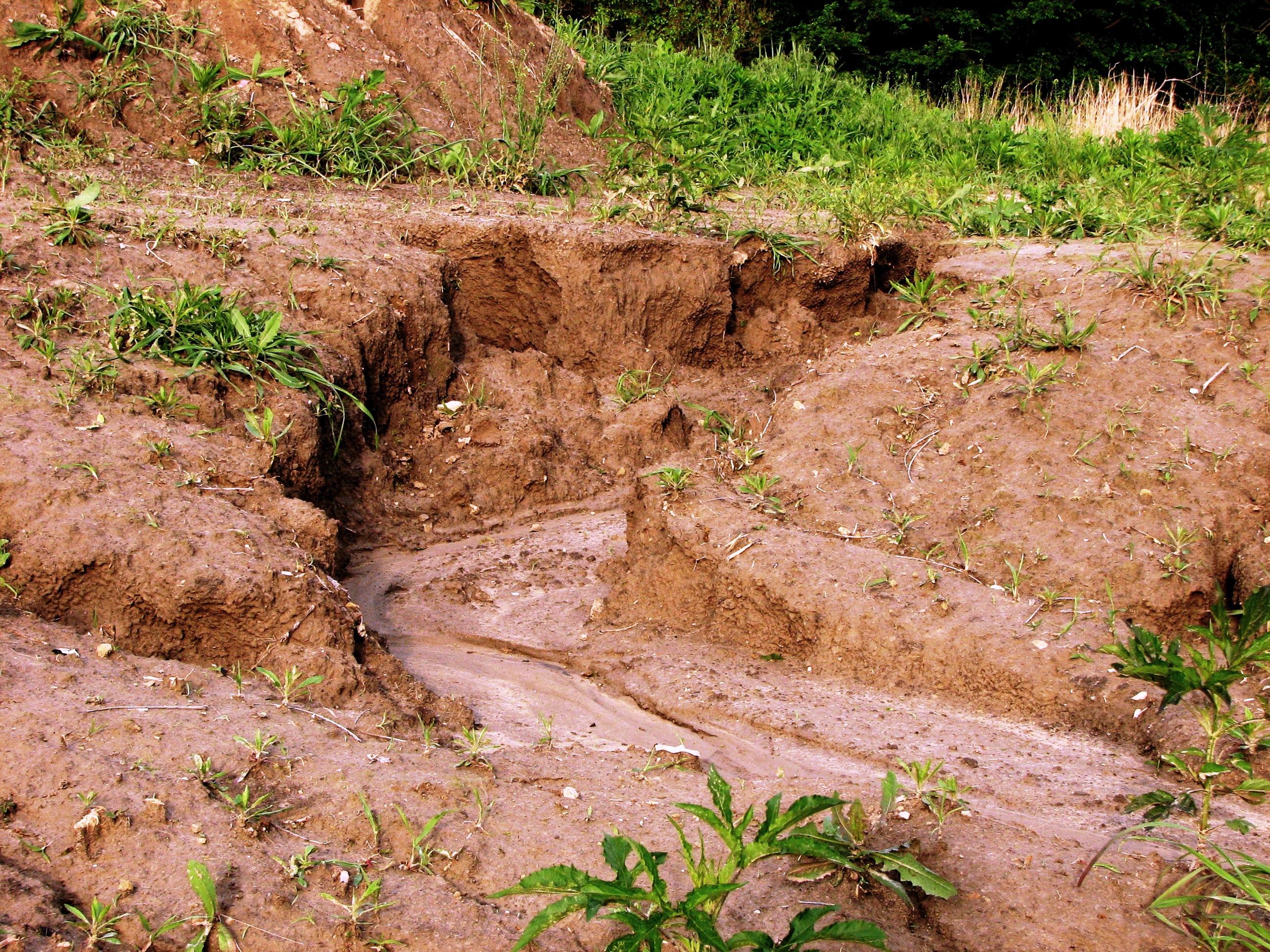 Landnutzung in den tropen for Boden im regenwald