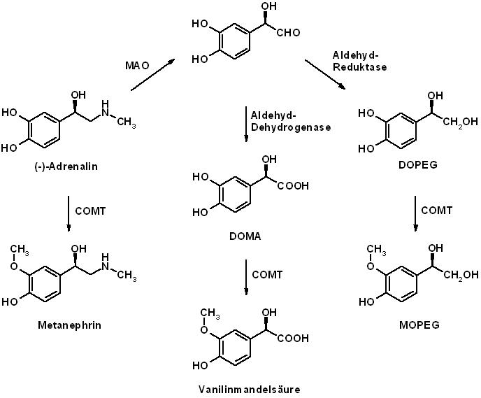 metabolisierung von medikamenten