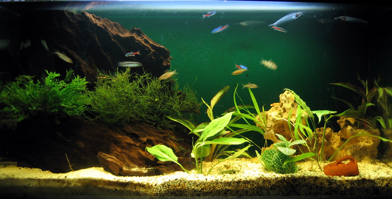 Aquariumsimple Incroyable De Aquarium Deco Des Idées