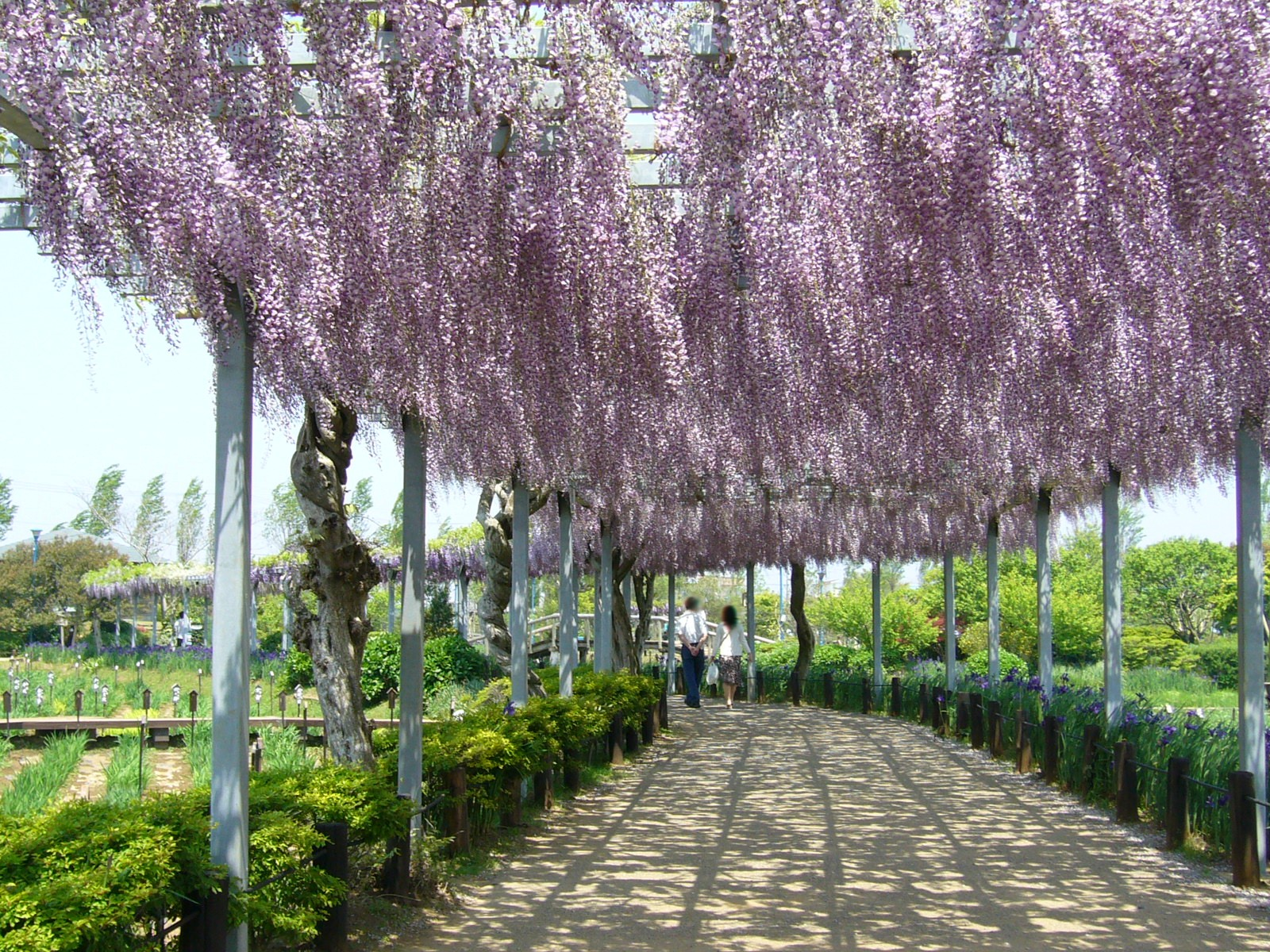 Japanese Arbor Design Drawings submited images