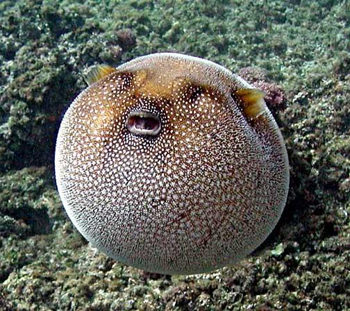 Смешные рыбы (30 фото)