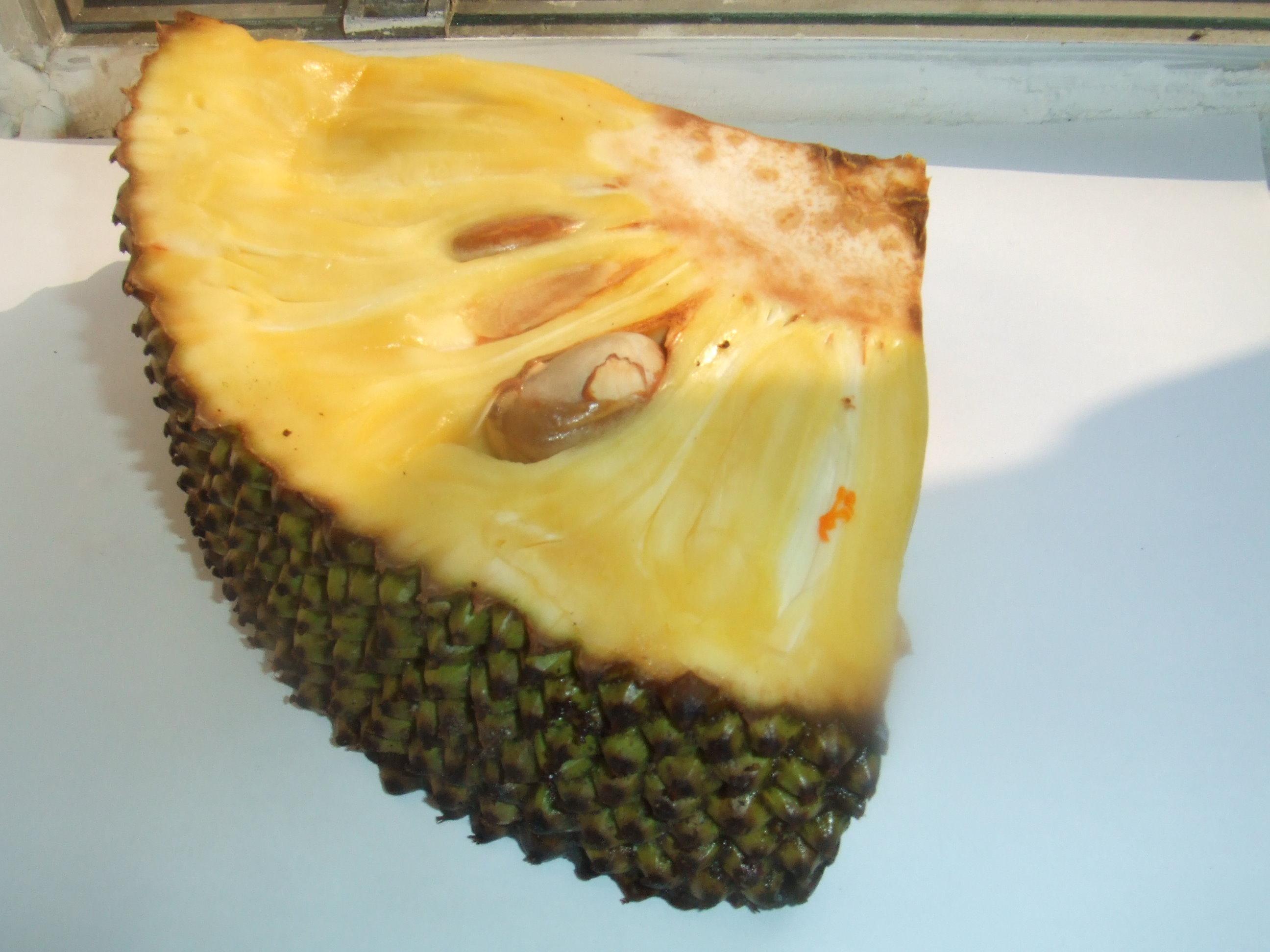 Джек-фрут или индийское хлебное дерево (JackFruit, Artocarpus