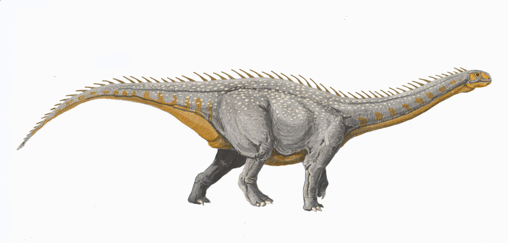 barapasaurus - photo #6