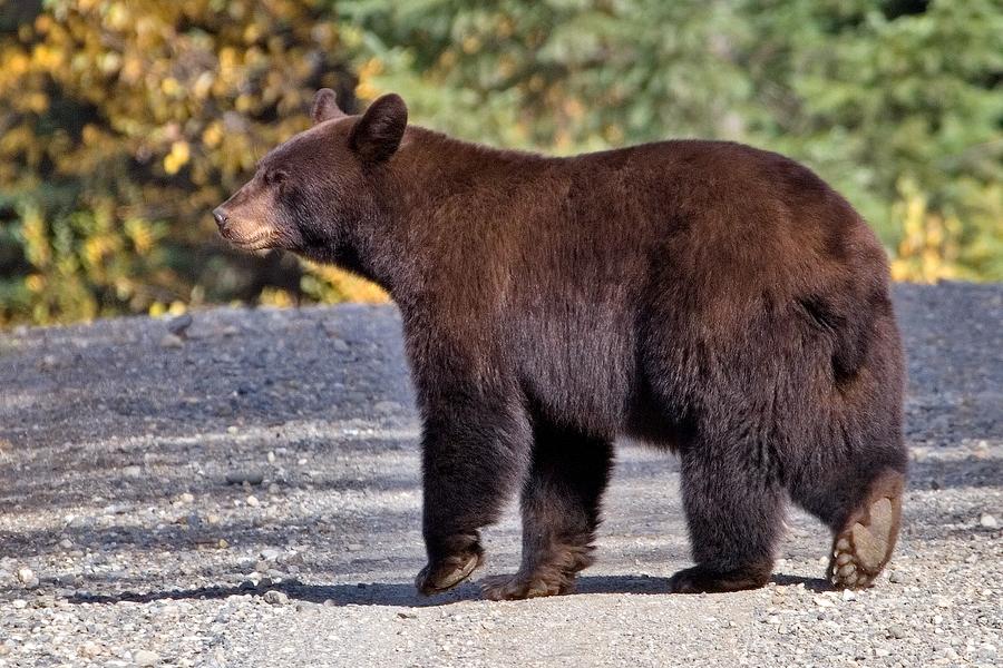 Bear Lake Vancouver Island Bc