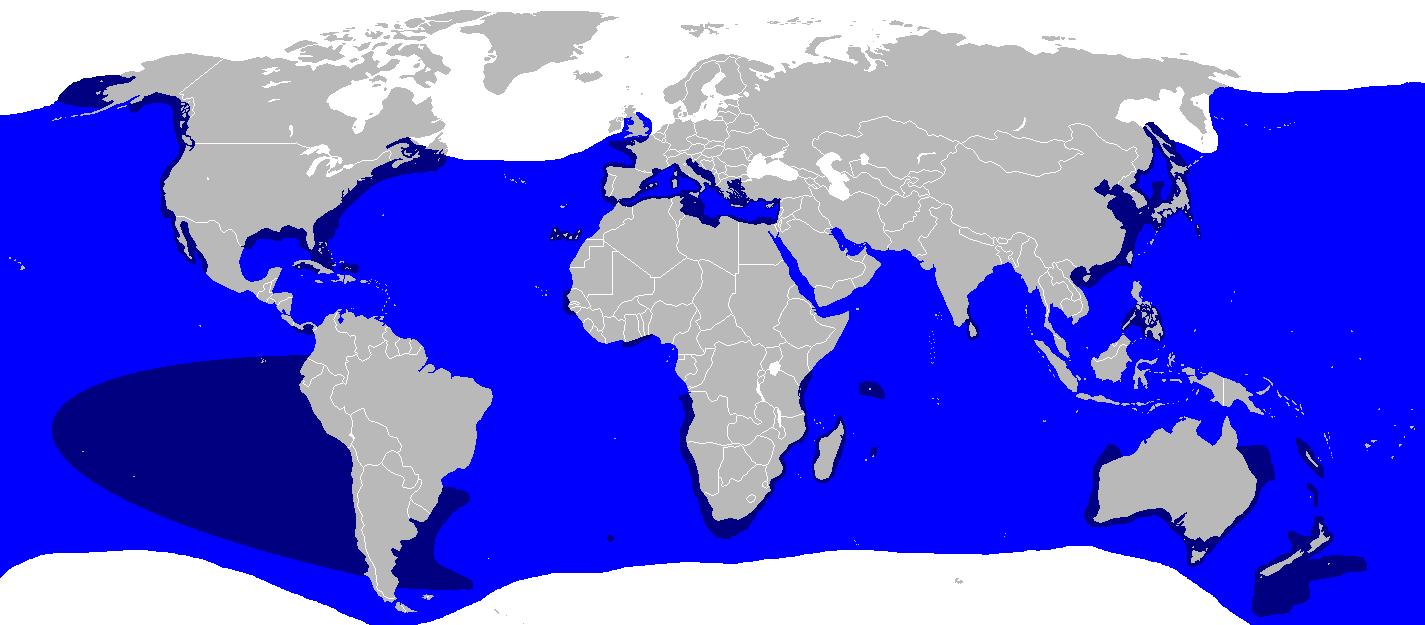 Vorkommen Weißer Hai