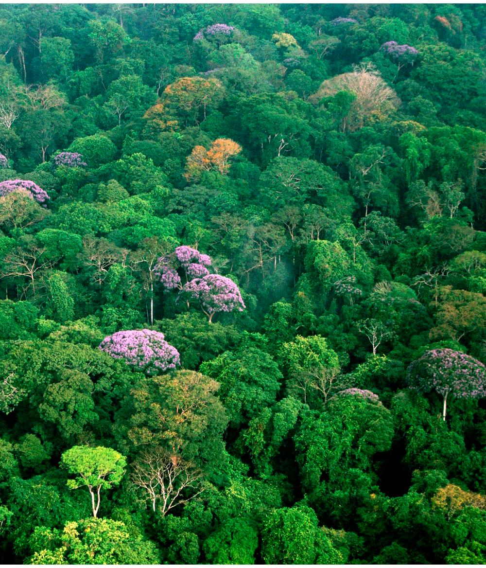 Tropischer regenwald for Boden im regenwald