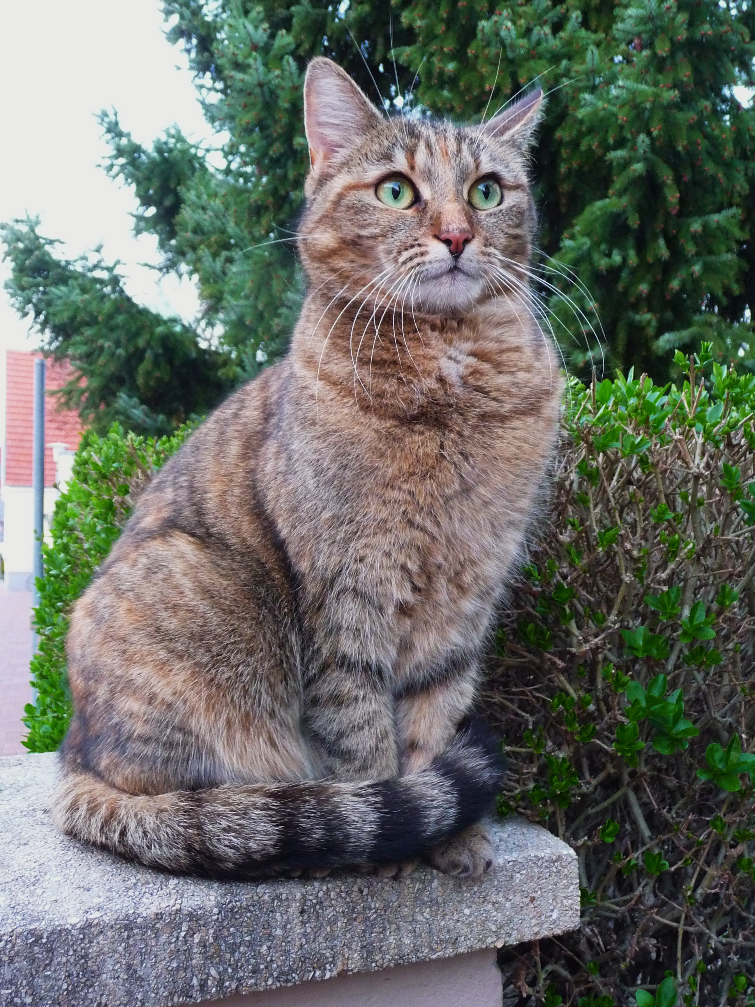 Welche Weibliche Katze Bin Ich Warrior Cats