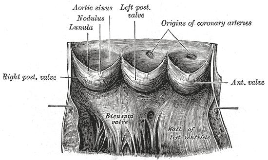 Stenose Verengung des Anus