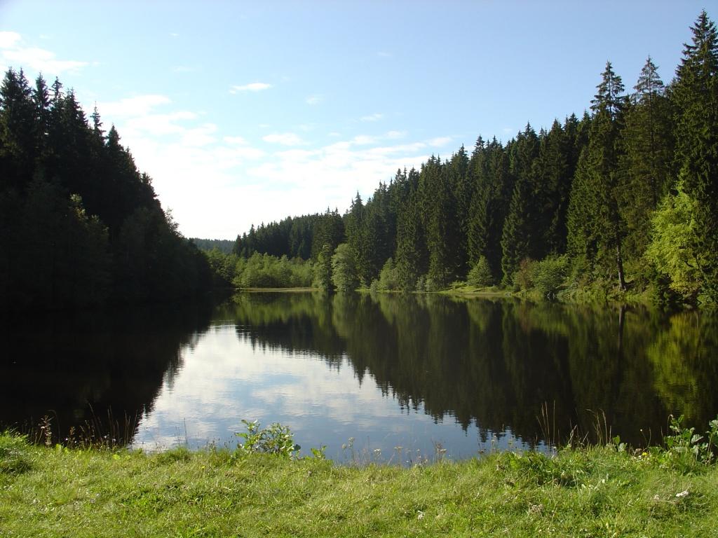 Oberharzer teiche for Fischbesatz teich