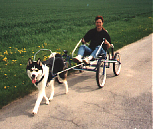 Dog Pulling Scooter For Sale