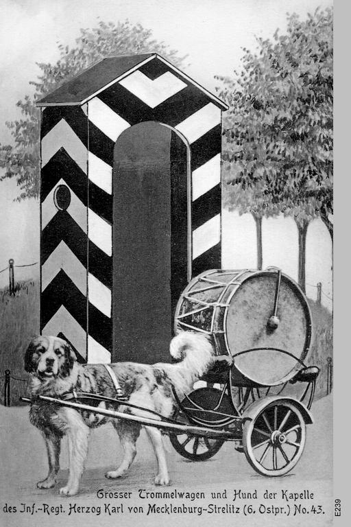 Собаки, как тягловая сила. Собачьи повозки в истории.