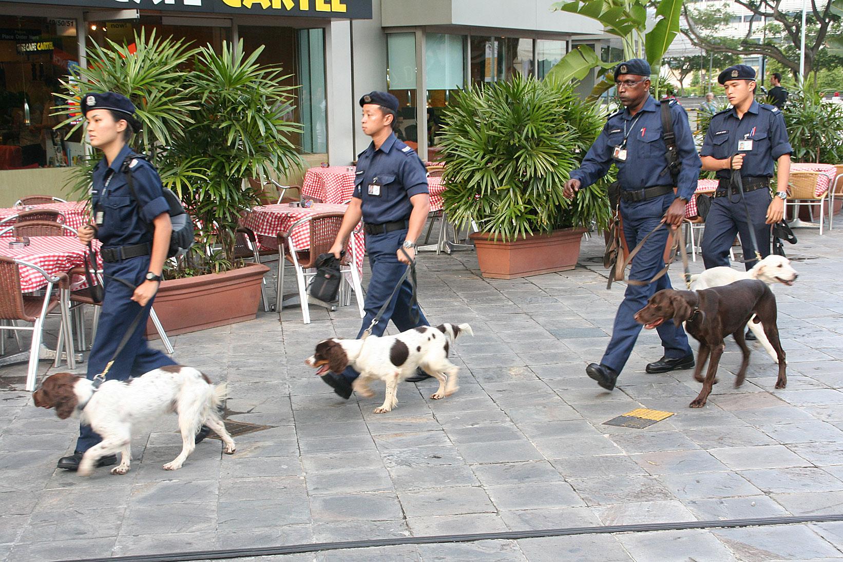 Military Dog Adoption Singapore