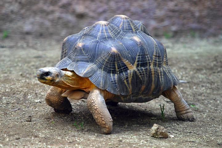 http://de.academic.ru/pictures/dewiki/76/Lightmatter_tortoise.jpg