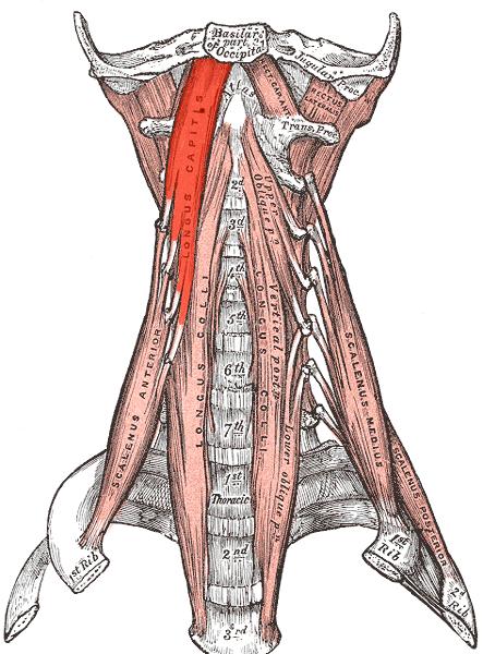 Rücken, Brustwand, Bauchwand, Achselhöhle, Schultergürtel Rücken ...