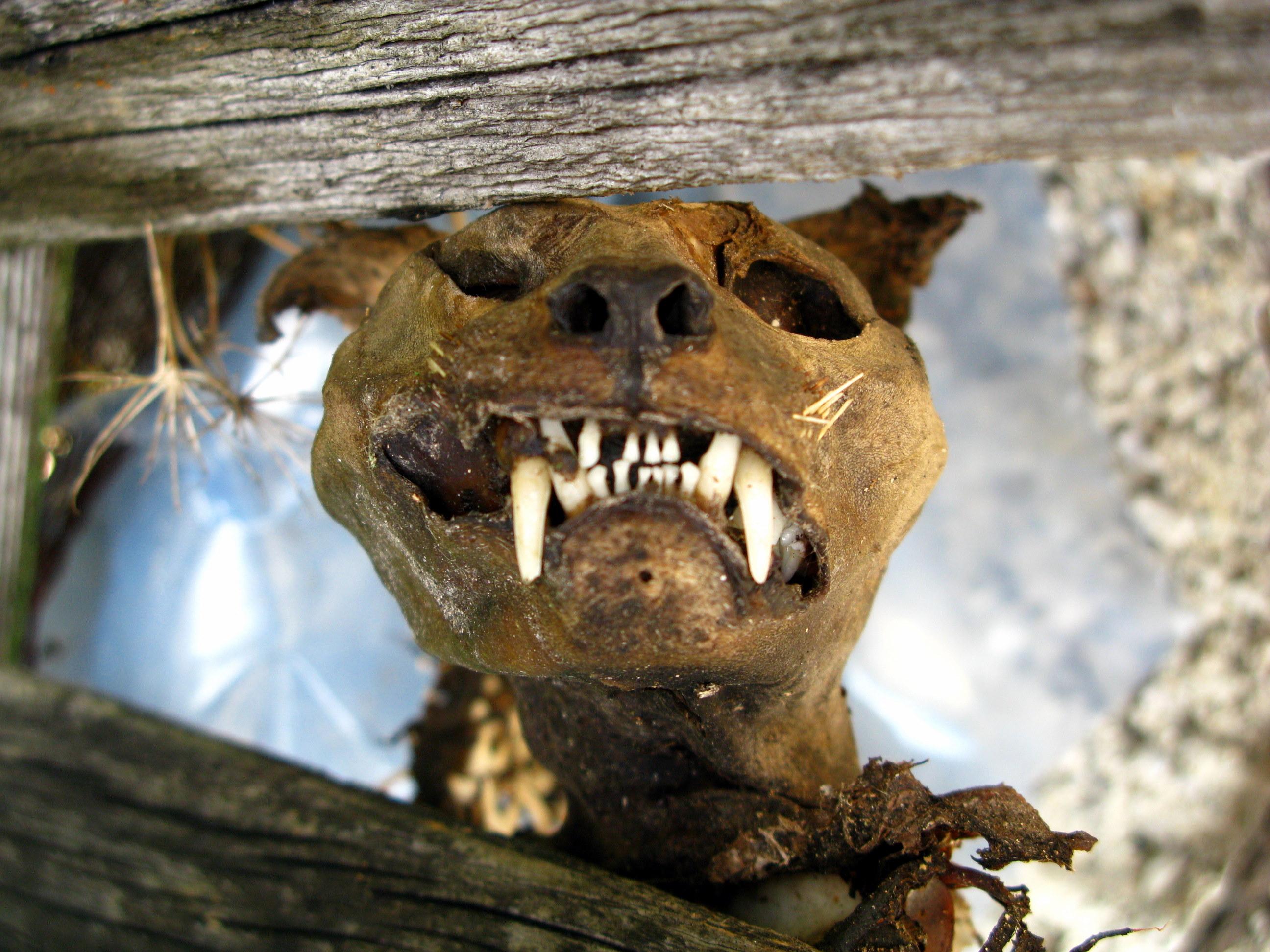 Mumifiziert