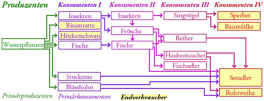 Atemberaubend Nahrungsketten Und Nahrungsnetze Arbeitsblatt Bilder ...