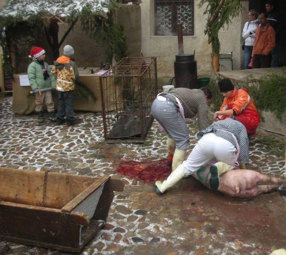 Fotos Aufhängen schlachtung