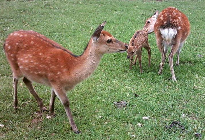wiki Liste zoologischer Gärten in Deutschland