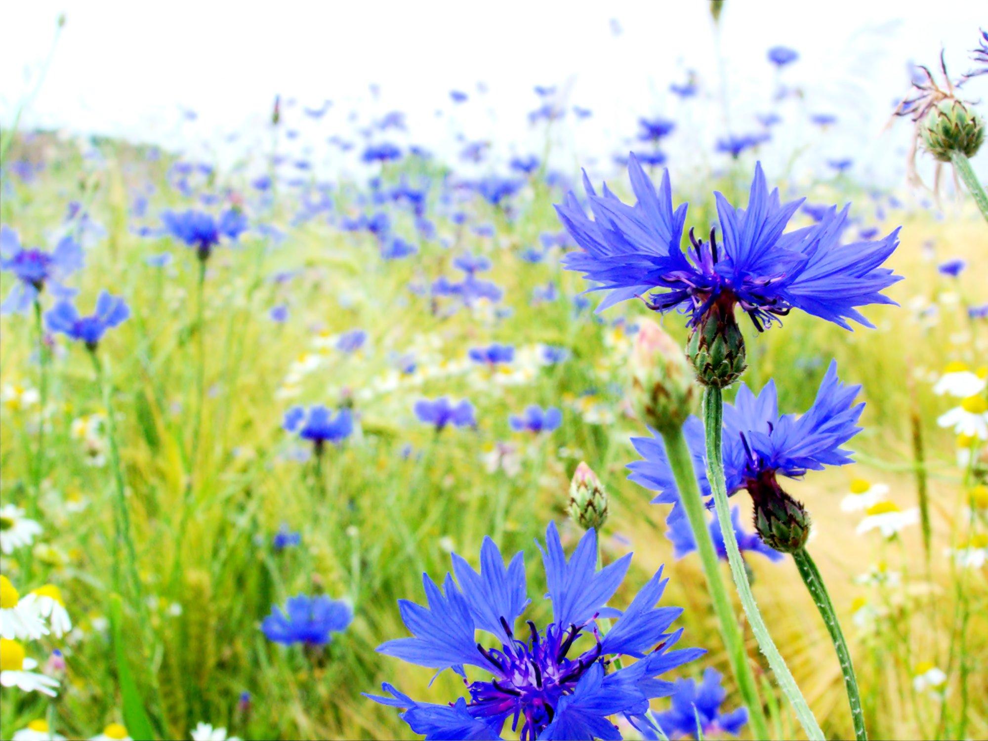 blumen in flowerpix image - photo #24