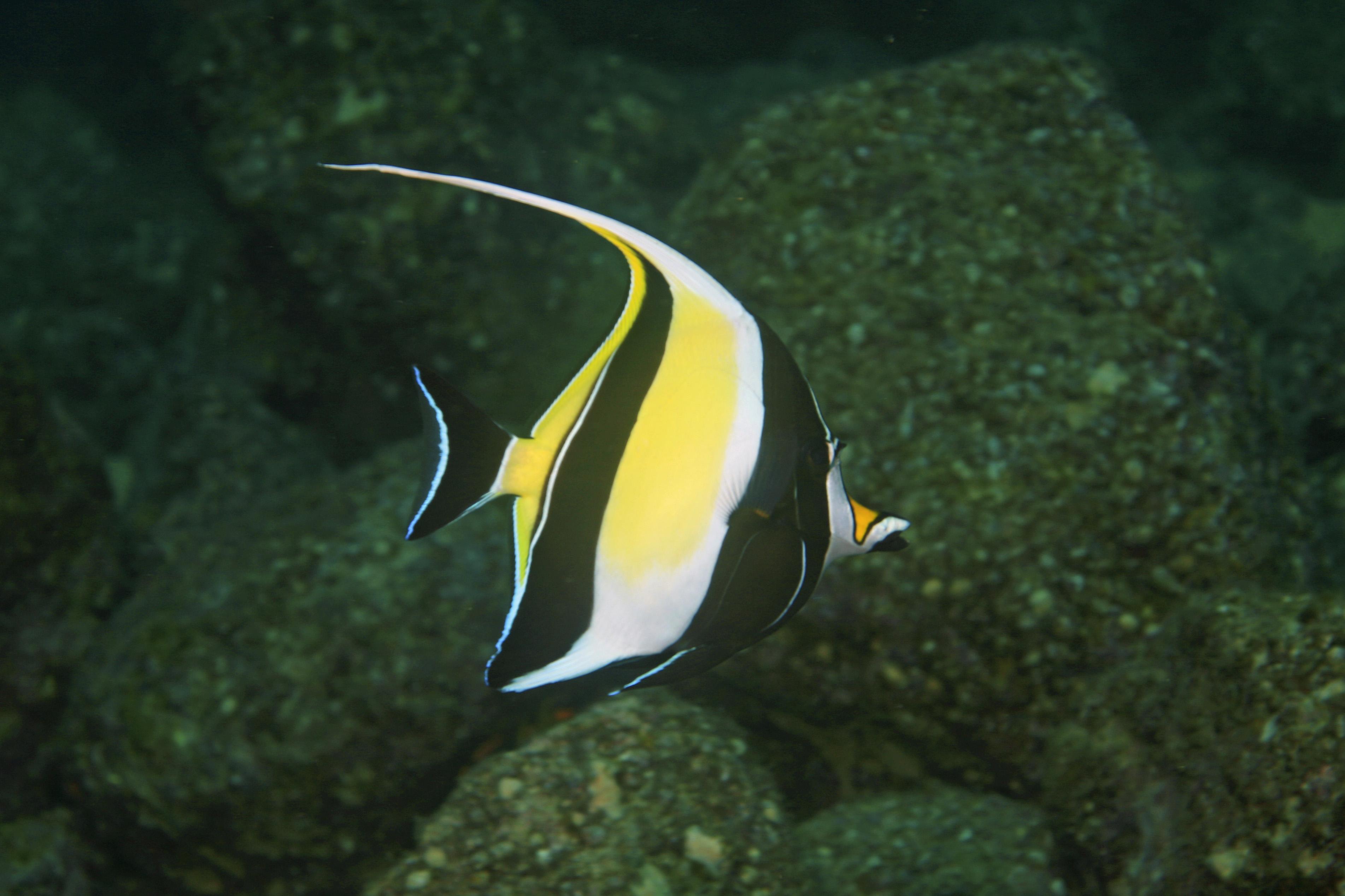 Was f r ein fisch ist das bei findet nemo skalar for Salzwasser aquarium fische