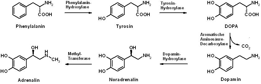 lebensmittel für stoffwechsel