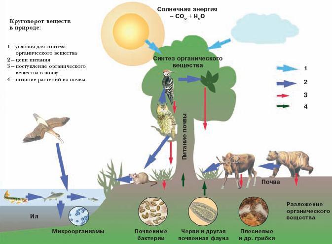 Как нарисовать природу схема